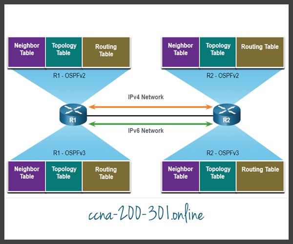 OSPFv2 vs OSPFv3 Data Structures